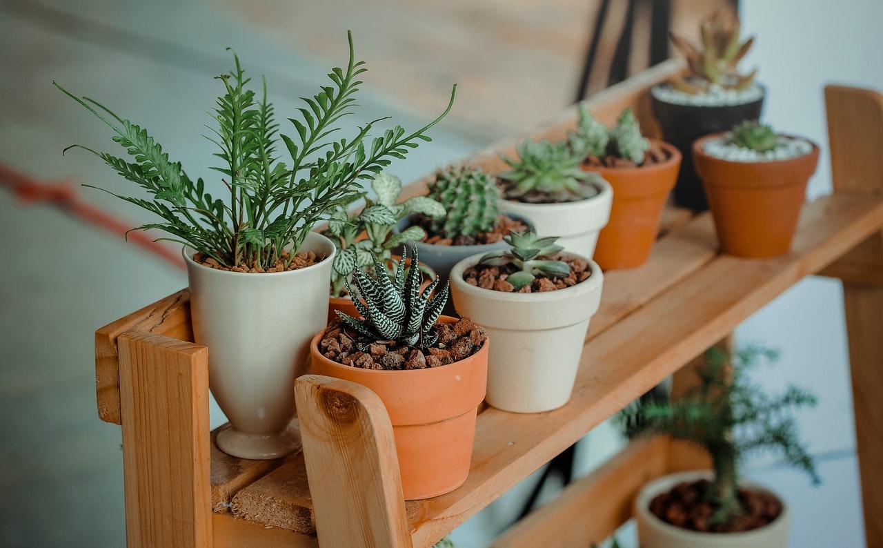 uprawa roślin