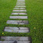 Trawnik przed domem – wybór nasion